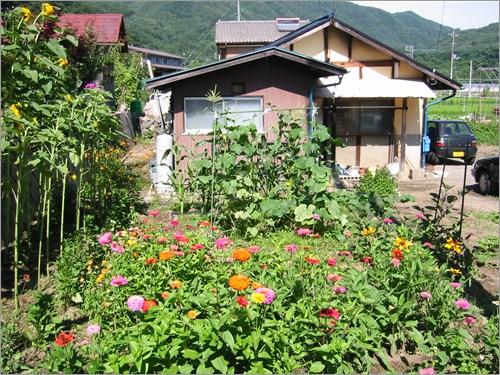 畑と花と雑草たち