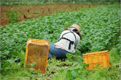 農作業をする