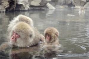 温泉に入るサルの親子
