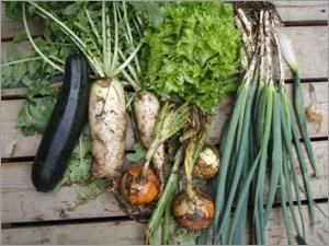 田舎の有機野菜