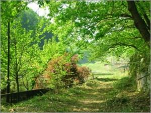 田舎の素朴な風景